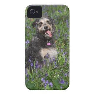 Maisie iPhone 4 Case