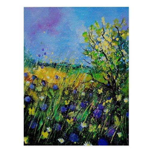 maíz daisies45 postal