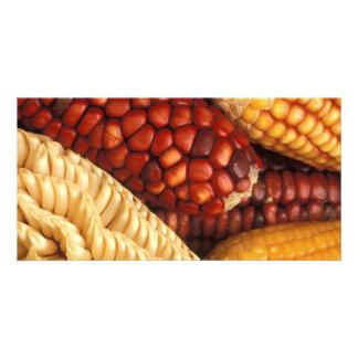 Maize Card