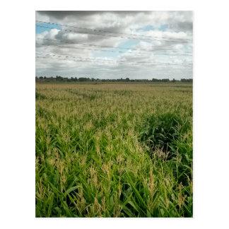 Maize maze postcard