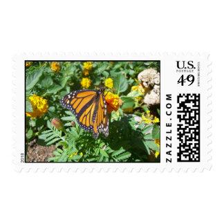 Majestad del monarca 10 sellos