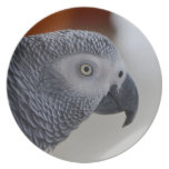Majestic African Grey Parrot Melamine Plate