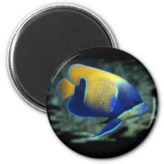 Majestic Angel Fish 2 Inch Round Magnet