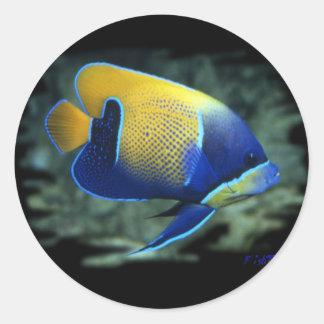 Majestic Angel Fish Classic Round Sticker