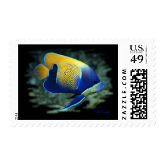 Majestic Angel Fish Stamps