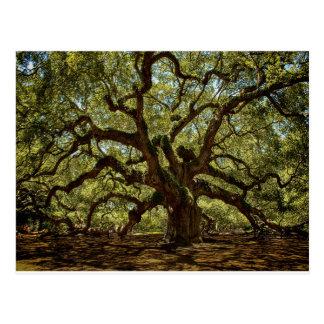 Majestic Angel Oak Postcard