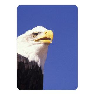 Majestic Bald Eagle Card
