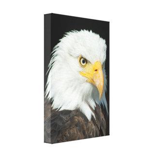 Majestic Bald Eagle Portrait Canvas Print