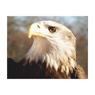 Majestic Bald Eagle Profile Canvas Print
