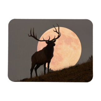 Majestic Bull Elk and Full Moon Rise Magnet