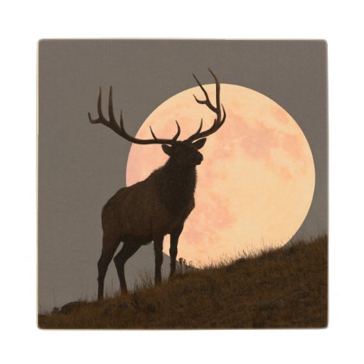 Majestic Bull Elk And Full Moon Rise Maple Wood Coaster