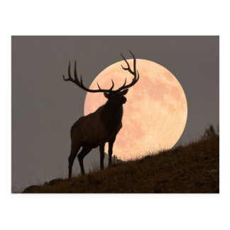 Majestic Bull Elk and Full Moon Rise Postcard