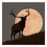 Majestic Bull Elk and Full Moon Rise Poster