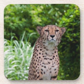 Majestic Cheetah Coaster