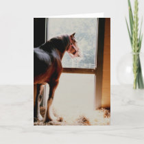 Majestic Clydesdale Card