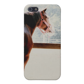 Majestic Clydesdale Cover For iPhone SE/5/5s