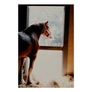 Majestic Clydesdale Poster