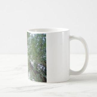 Majestic Coast Redwoods Coffee Mug