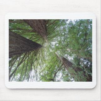 Majestic Coast Redwoods Mouse Pad
