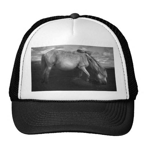 Majestic Dartmoor Pony Portrait meshback hat