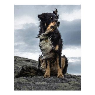 Majestic Dog Letterhead