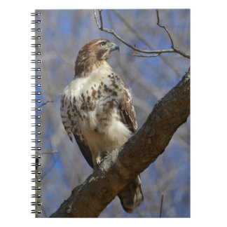 Majestic Hawk Notebook