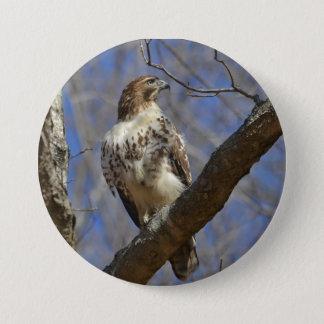 Majestic Hawk Pinback Button