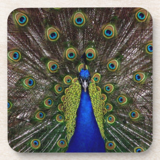 Majestic Indian Peacock Drink Coaster