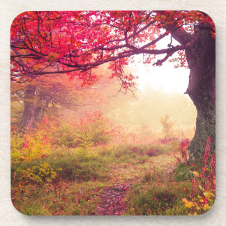 Majestic Landscape With Autumn Trees In Forest Coasters