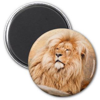 Majestic Lion Magnet