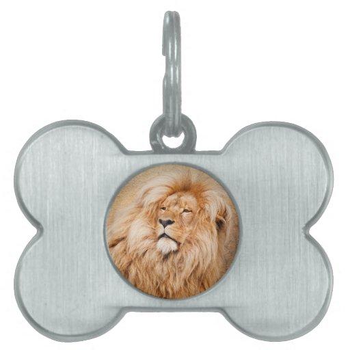 Majestic Lion Pet ID Tags
