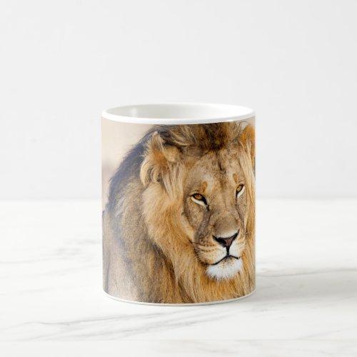 Majestic lion photo coffee mug