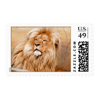 Majestic Lion Stamps