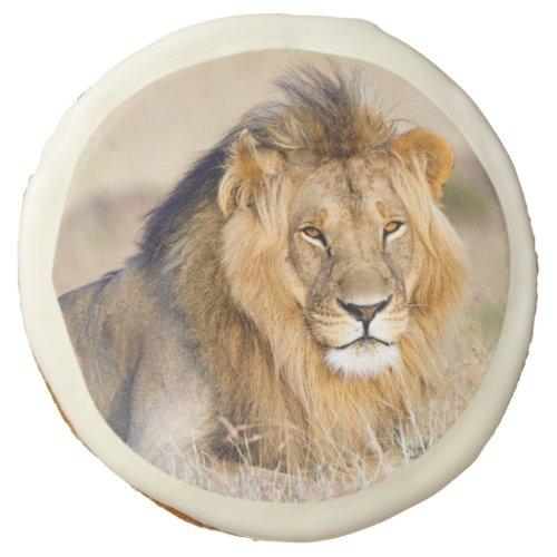Majestic lion sugar cookie