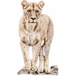 Majestic Lioness Standing Photo Sculpture