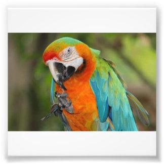 Majestic Macaw Photo Art