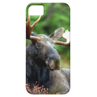 Majestic Moose Meadow iPhone SE/5/5s Case