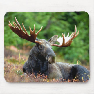 Majestic Moose Meadow Mouse Pad