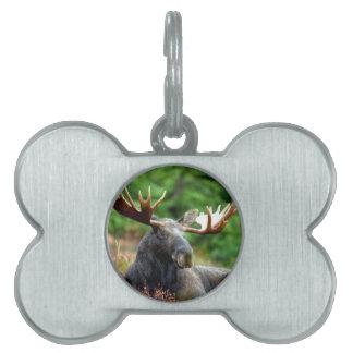 Majestic Moose Meadow Pet ID Tag