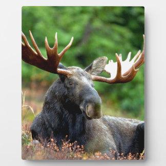 Majestic Moose Meadow Plaque
