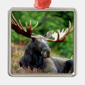 Majestic Moose Meadow Square Metal Christmas Ornament