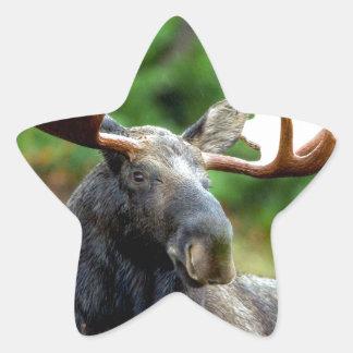 Majestic Moose Meadow Star Sticker