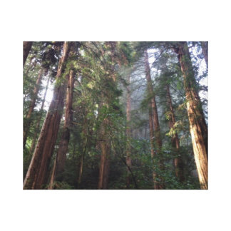 Majestic Muir Woods Canvas Print
