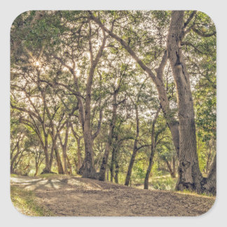 Majestic Oaks of The Whitney Canyon Trail Square Sticker