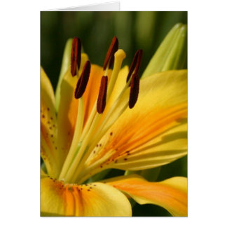 Majestic Orange and Yellow Lily Flower Card