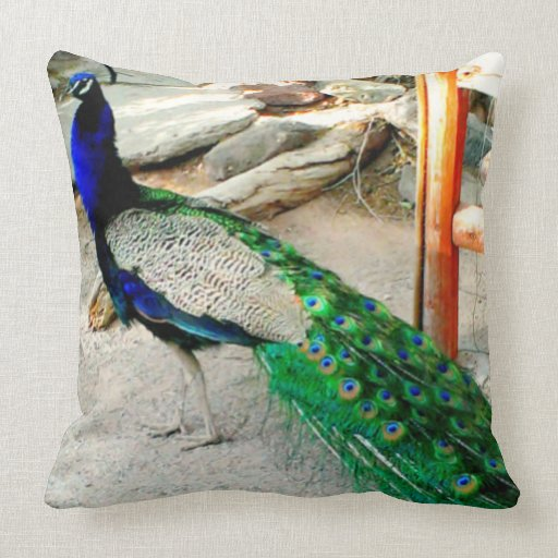 Throw Pillows 20 X 20 : Majestic Peacock - 20