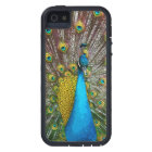 Majestic Peacock Bird in iridescent shades iPhone SE/5/5s Case