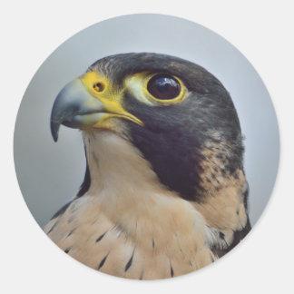 Majestic Peregrine falcon Classic Round Sticker