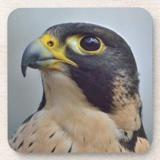 Majestic Peregrine falcon Coasters