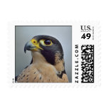 Majestic Peregrine falcon Postage Stamp